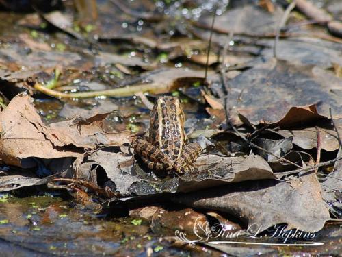 amphibian-2