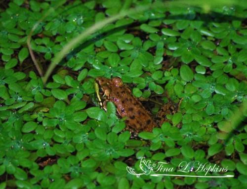 amphibian-5