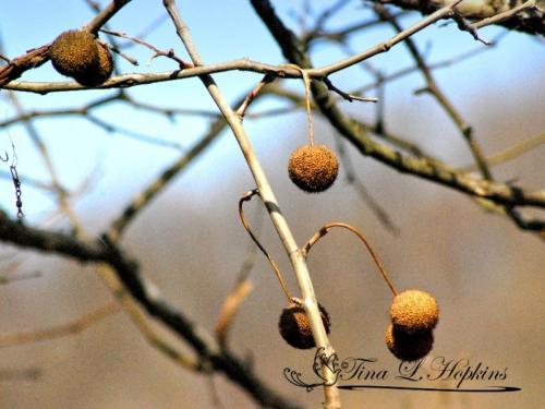 seeds-14