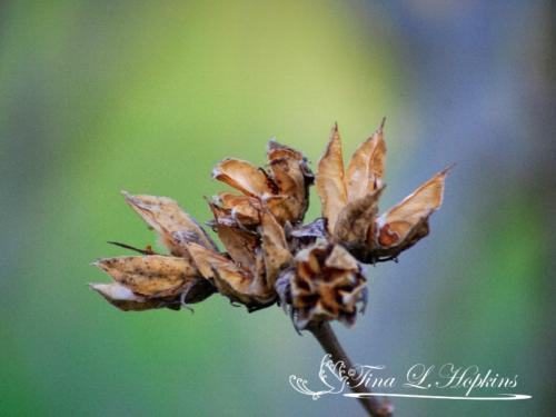 seeds-9