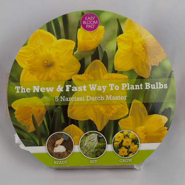Dutch Master Daffodil Easy Bloom Pad