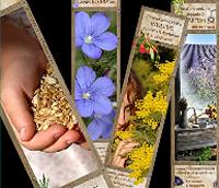 Exposition Plantes et usages
