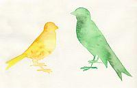 Bird Watercolors