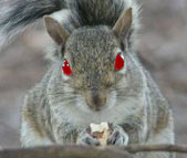 A crazed squirrel (c) scary squirrel world