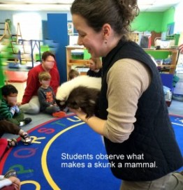 teaching with skunk