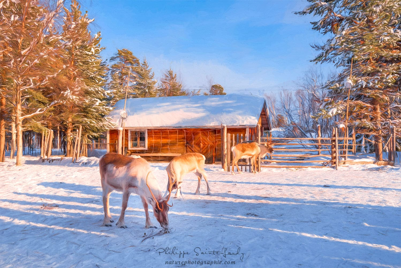 Laponie  6632 Latitude Nord  NATUREPHOTOGRAPHIE