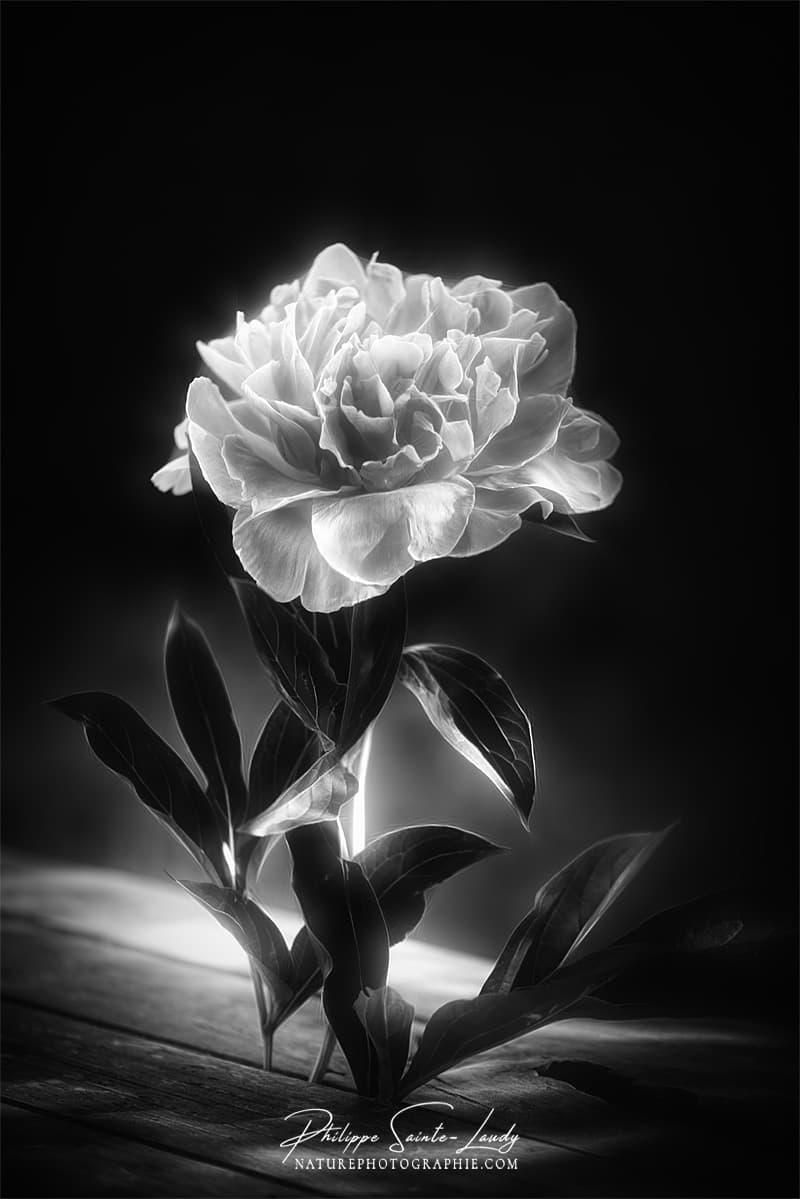 photos noir et blanc la galerie photo