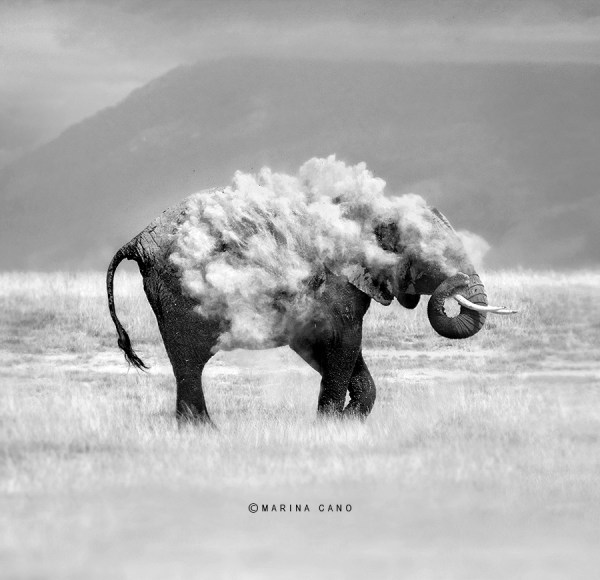 Award-Winning Elephant Photography
