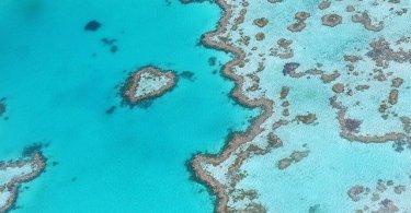 belize reef