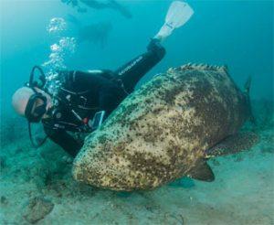 Diving Jensen Beach Stuart Florida