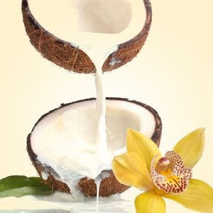 Best Vanilla Fragrance Oils NG Coconut Vanilla Type Fragrance Oil