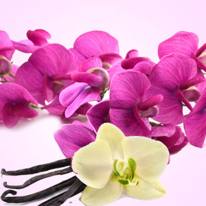 Best Vanilla Fragrance Oils Sweet Pea Vanilla Fragrance Oil