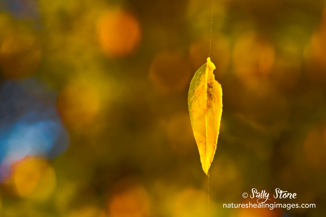 Floating Golden Leaf