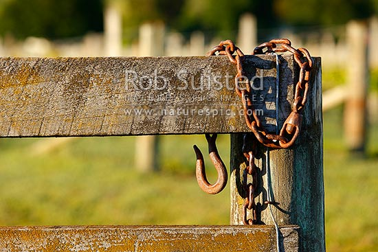 Farm gate posts and old rusty steel closure hook hanging New Zealand NZ Stock photo from New