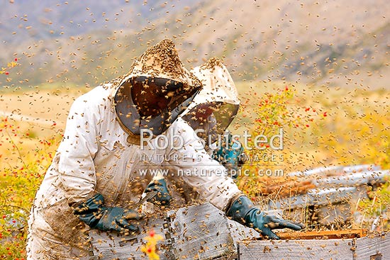 Beekeepers apiarists collecting honey from beehives