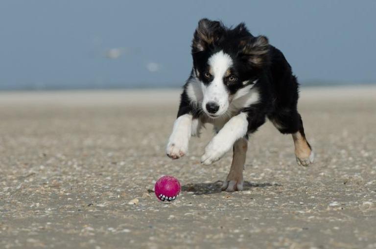 CBD dog treats for joint pain
