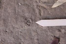 Woodrat Tracks