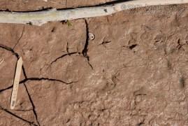 Sandpiper Tracks