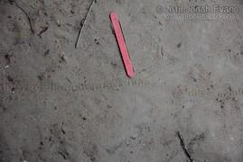 Caterpillar Tracks