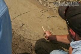 Casey and Quail Tracks