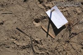 Ant Lion Hole