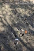 Water Buck? Tracks