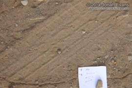 Toad Tracks