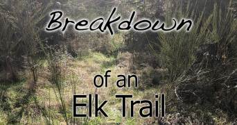 Breaking Down an Elk Trail