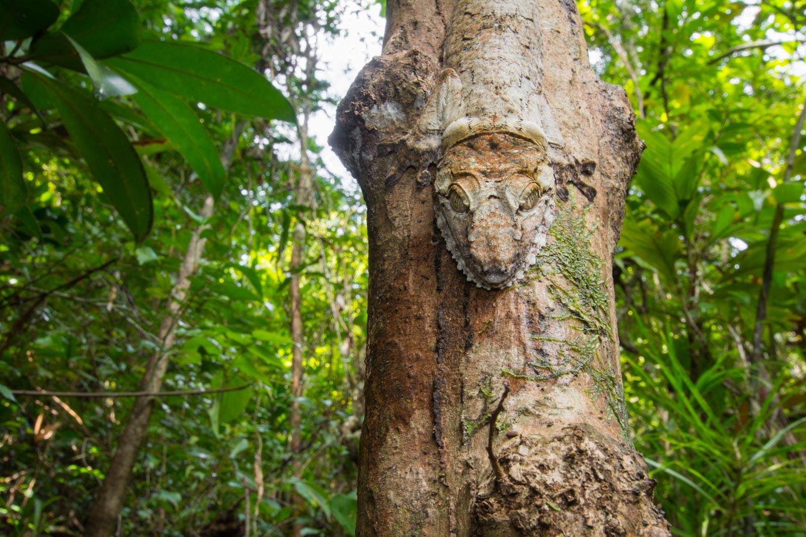 The Wildlife Of Madagascar S Rainforests