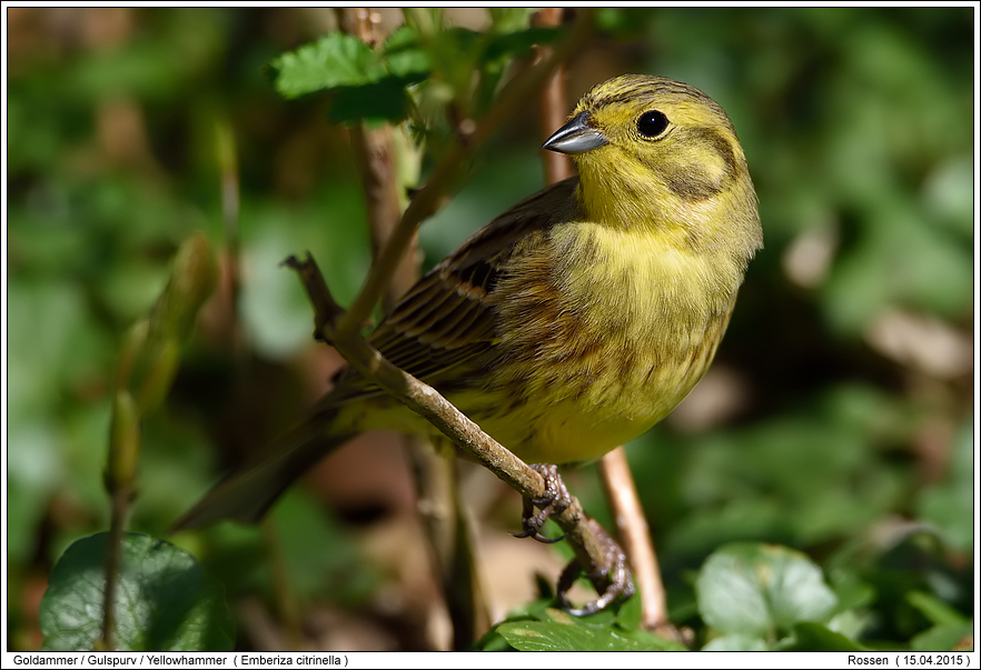 Vögel am Futterhaus-Foto - Naturfotografie Digital - Fotos