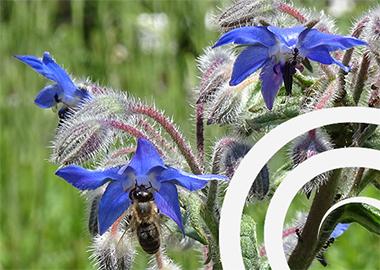 NAET-Allergie-Therapie