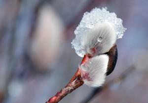 blossom-664313_1280