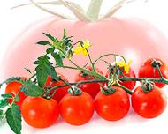 Wenn du einen Rosenstrauch willst, pflanze keinen Tomatensamen.