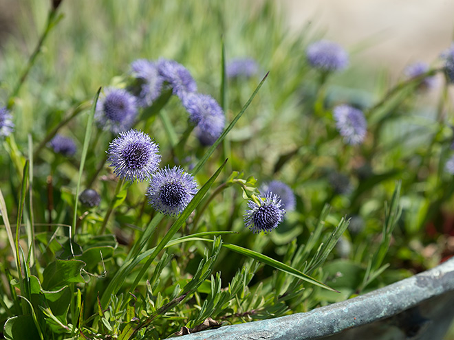 Wildblumen in Blumentpfen und Blumenksten