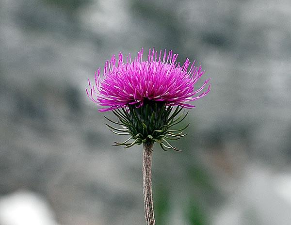 28 Juni 2007  Aufgenommen im Karwendel in der Nhe von