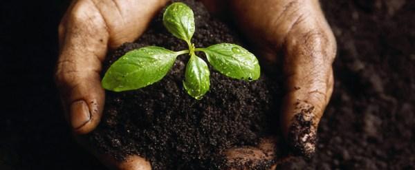 landscape mulch hardwood