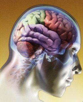El Nervio Vago y su Influencia en la Salud