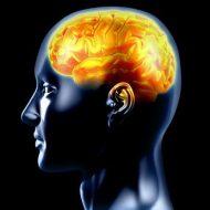 Como actúan los Hemisferios Cerebrales
