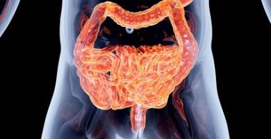 Intestinos y Flora intestinal
