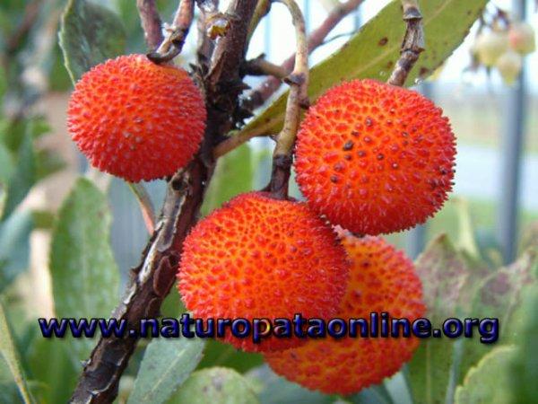 Frutti di stagione non dimentichiamo il colorato e