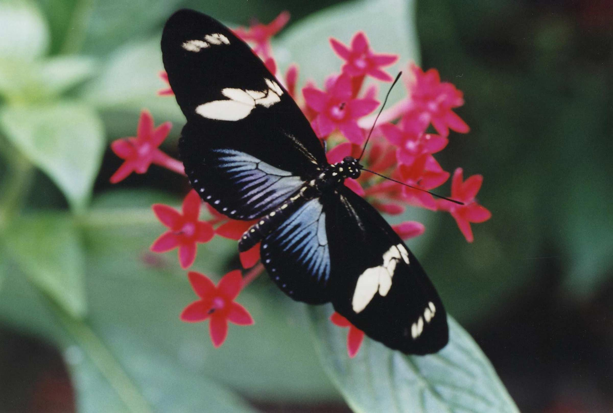 Naturospace Honfleur  Jardin zoo serre  papillons Normandie