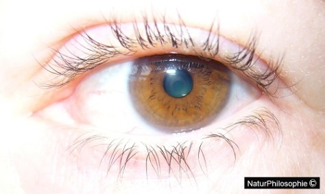 A close-up photograph showing a brown eye. Image: NaturPhilosophie