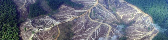 """Global Forest Watch Map Recording Tree Loss in """"Real Time"""""""