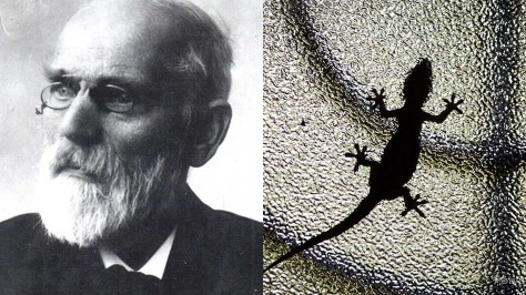 A photographic collage showing a black and white portrait of Van der Waals and a gecko climbing on the outside of a corrugated glass panel.