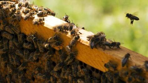 A photograph showing the activity in a bee hive.