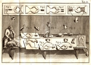 An etching illustration showing Luigi Galvani's experiments on frog legs.