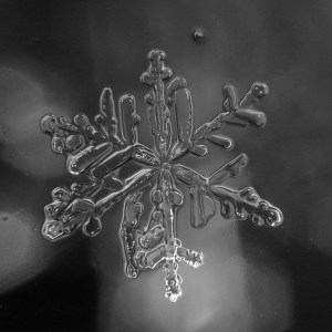A close-up photograph showing a melting snowflake.