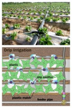 A photograph and a diagram illustrating the drip irrigation method.