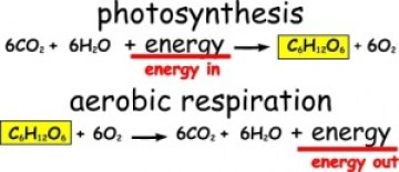 Two word equations describing the competing processes of photosynthesis (energy in) and aerobic respiration (energy out).