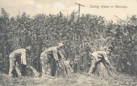 An old sepia-coloured photograph showing three labourers harvesting hemp in Kentucky.